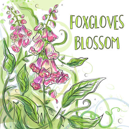 invation: Vector floral blossom beautiful nature garden digitalis, purple foxglove watercolor flower pattern background with blooming plants hand drawn in fresh color isolated white background. Postcard design