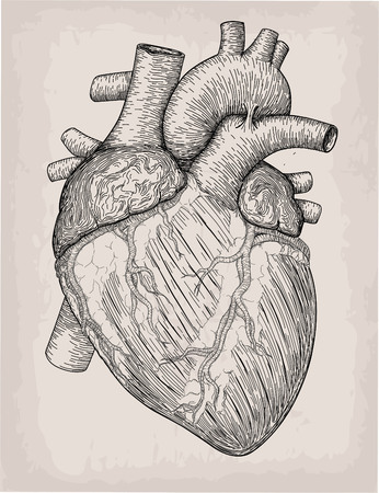 Human heart hand drawn. Anatomical sketch. Medicine, Vector illustration engraving element. Anatomical high detailed tattoo art. Design element Çizim
