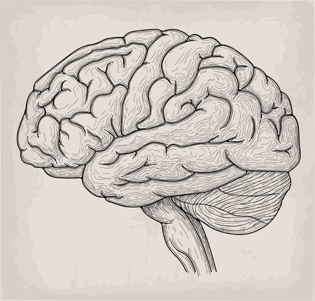 Illustration Poster Brain Anatomy Drawing Pictures | www ...