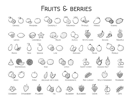 Outline black linear web icon set - Fruit & berries Thin bold Line food Icons For logo, label Orange banana melon apple, blueberry, pineapple pomelo, kiwi peach, fig kiwi, tropical collection on white 向量圖像