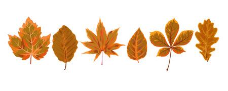 Vector autumn watercolor style seasonal Fall maple chestnut alder tree brown orange leaves drawn forest nature leaf foliage to postcard banner decorative nature design designer elements set collection