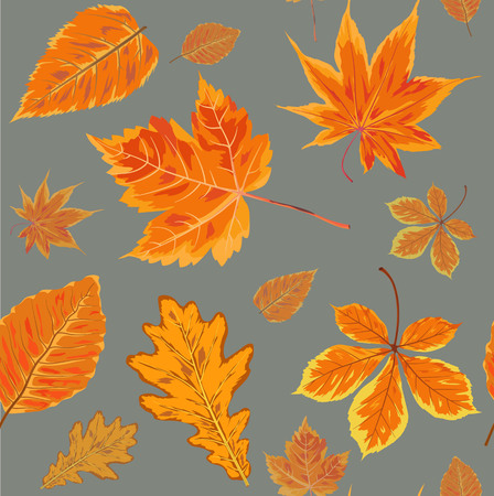 floral: Vector Seamless Autumn fall season patten background floral watercolor style with colorful falling orange yellow  leaves of forest maple oak tree. Decorative beautiful painted print on  light gray