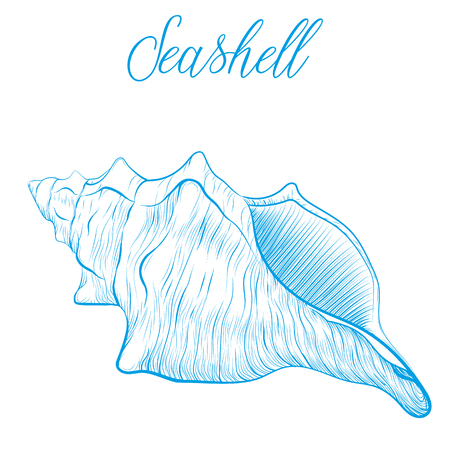 Sea shell Hand drawn blue linear vector illustration.Marine wildlife decorative designer graphic art element isolated. Perfect for invitations, greeting cards, posters Illustration