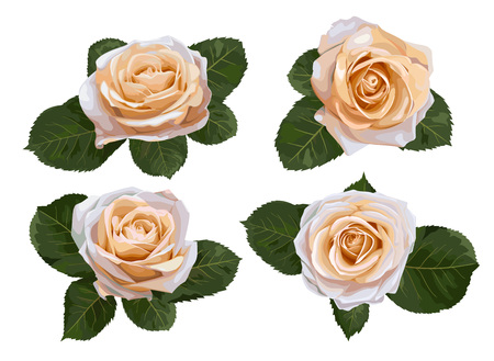 Set of vector watercolor tea roses isolated on white background. For the design of wedding invitations, greeting cards, flyers, fabric, certificates, labels, banners. Illustration