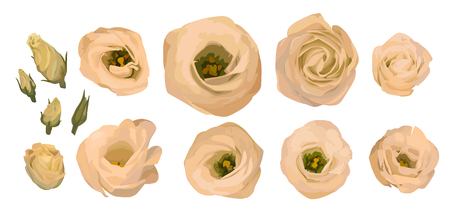 Set of yellow rose, eustoma, lisianthus. Watercolor vector illustration. Cream, peach, orange in watercolor style. Elements for design of bouquets isolated on white background.