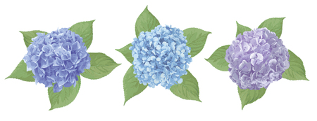 Blue, purple, sapphirine flower of hydrangea, mophead, lacecap, panicle. Seasonal plants, leaf and herbs big vector collection.All elements are isolated and editable.