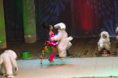 11 years old: DNIPROPETROVSK, UKRAINE - FEBRUARY 8: Unidentified children, ages 8 -11 years old, perform CIRCUS on February 8, 2015 in Dnipropetrovsk, Ukraine