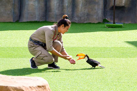 girl the birds trainer with doing tricks toucan on bird's show in Vietnam, Nha Trang City, Vinpearl Amusement Park 2018-01-12 에디토리얼