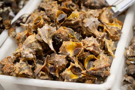 Mediterranean sea snail conch shells, traditional seafood canailla in spanish