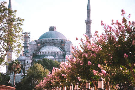Sultan Ahmed Mosque that also known as the Blue Mosque. One of the most popular sights in Istanbul. View from the garden with pink flowers.
