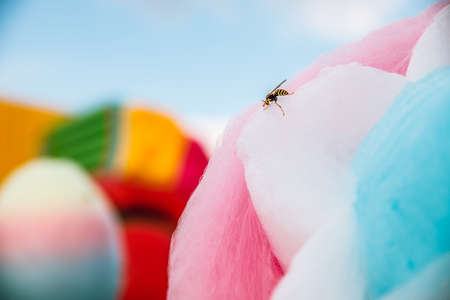 Wasps love sweets. Wasp sits on cotton candy.