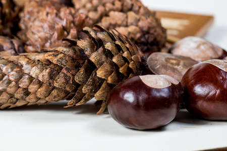 fir cones with chestnuts on a white background Imagens
