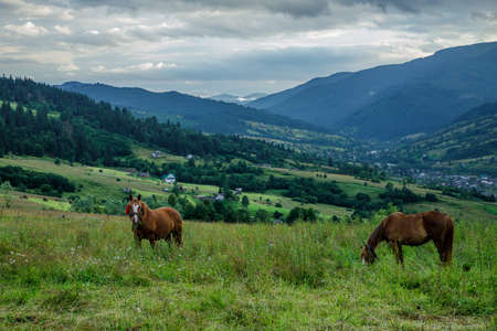 Horses on a beautiful pasture in the mountains Stockfoto