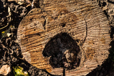 Old rotten wood of a rotten tree. Weathered trees are destroyed. Background or texture. Wood rot-original natural wood texture. 版權商用圖片