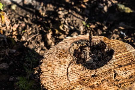 Old rotten wood of a rotten tree. Weathered trees are destroyed. Background or texture. Wood rot-original natural wood texture.