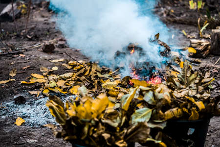 Burning. Autumn bonfire with smoke. Yellow leaves in the smoke.