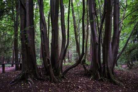 Hartshill ヘイズの国公園、ナニートン英国で木の幹