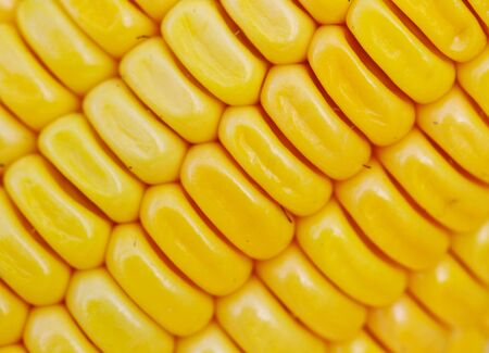 Closr - up Corn Stock Photo