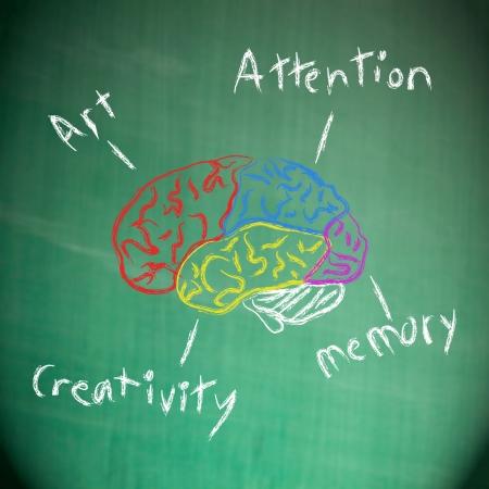 sistema nervioso: Dibujo cerebro humano