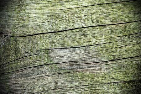 Wood texture Stock Photo - 18811132