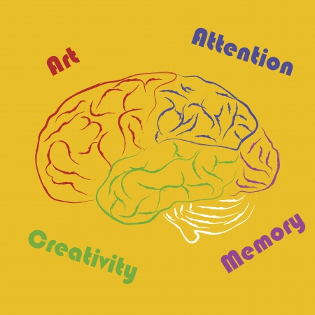 occipital: Drawing human brain