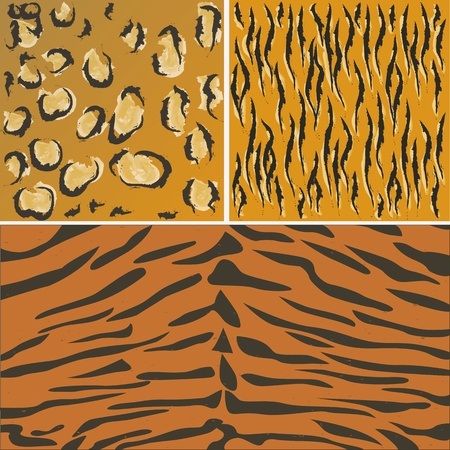 tiger skin pattern  photo