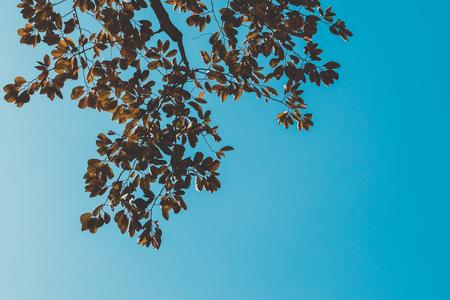 branch vintage on blue sky Stock Photo