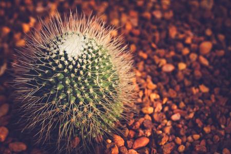 cactus vintage style