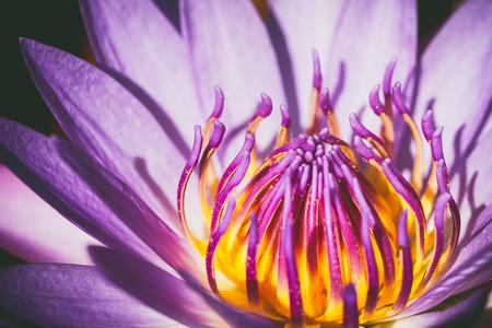 lotus flower vintage style