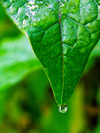 This is drop on leaf. It is theme of nature. photo