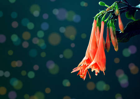 Fuchsia flowers pink with color spots Stock Photo