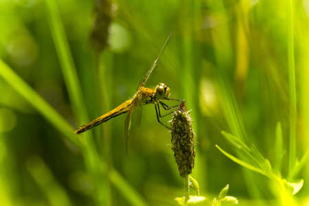 dragonfly in grass Stock Photo