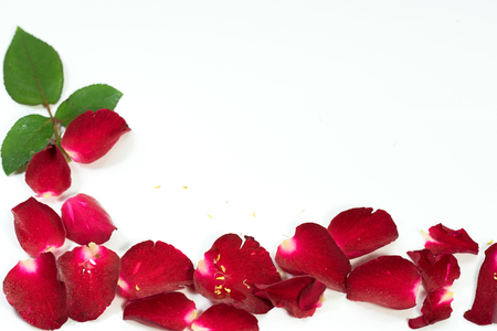 Red Rose petals are framed isolated on white.