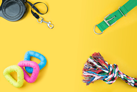 Pet accessories on yellow background.