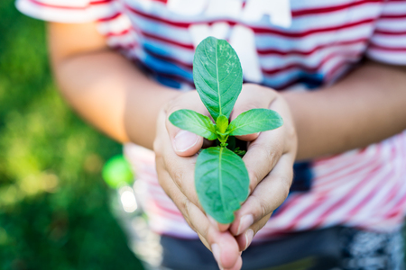 Hand kid hold trees in environment concept Stock Photo