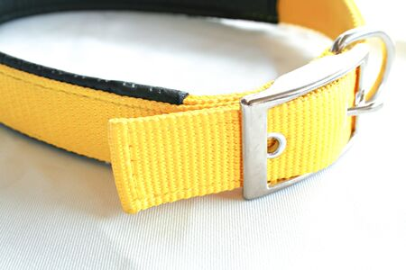 Pet collars for dog or cat on isolated white