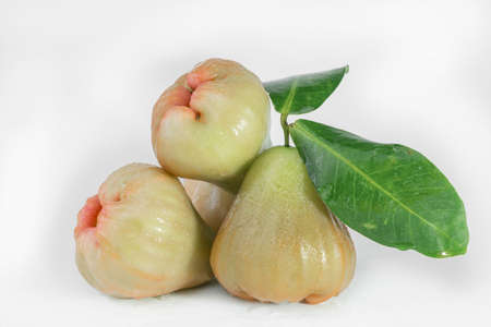Rose apple is a fruit on white background 免版税图像