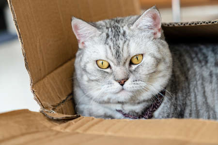 Close up cute cat sleep in box.  Pets concept 免版税图像