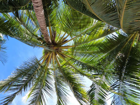 Blurred coconut trees with clear sky in summer holiday concept
