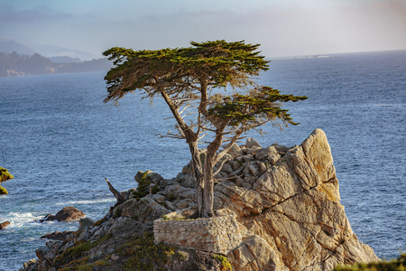 Pebble Beach, California, February 17, 2018:  The Lone Cypress is an iconic tree that stands on top of a granite outcropping in Pebble Beach, between Pacific Grove and Carmel-by-the-Sea. It's a Monterey cypress, endemic to just a few native groves in Carm