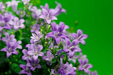lovely blue flowers