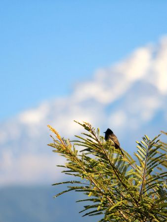 birds scenery: Small bird at snow mountain Stock Photo