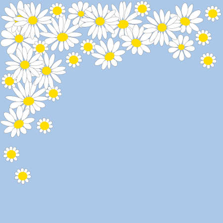 Many white daisies on a blue background