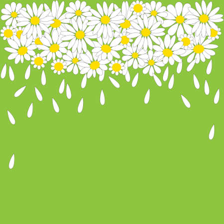 many white daisies on a green background Vector