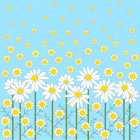 chamomile flowers on a blue background Vector
