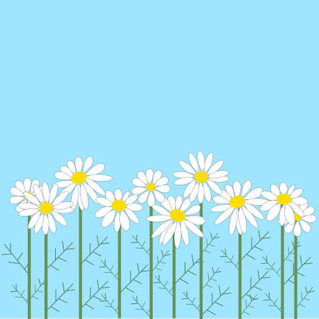 number of chamomile flowers on a blue background Vector