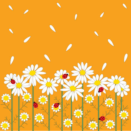 chamomile flowers on a orange  background