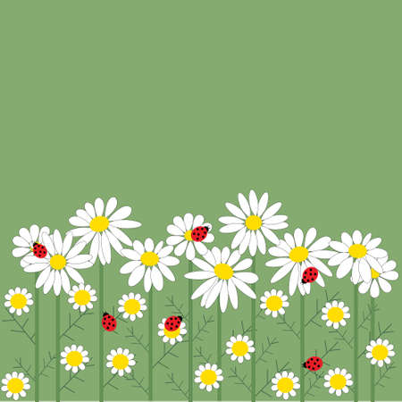 Chamomile flowers on a green  background Vector