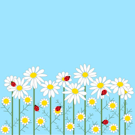 Chamomile flowers with a  ladybirds on a blue backgroun Vector