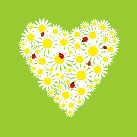 The heart of a daisies with ladybirds Vector
